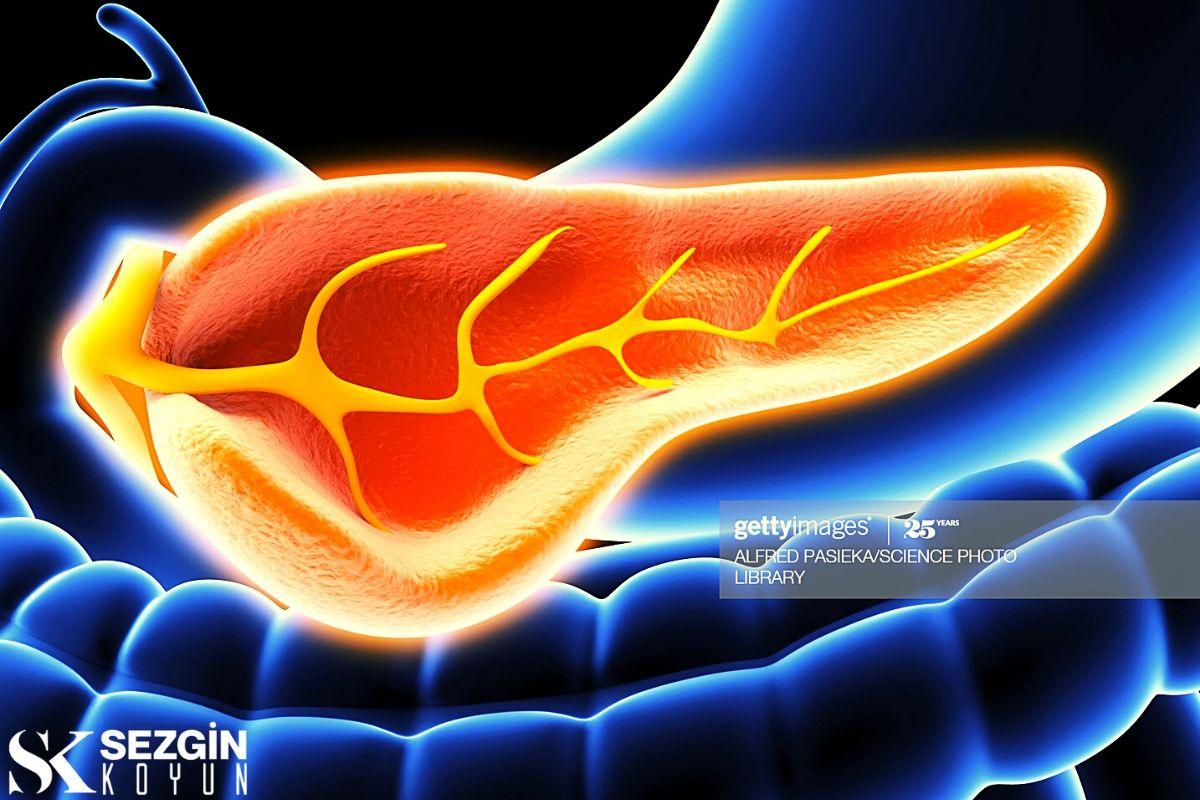 Pankreas Nedir? - Sindirimde Fonksiyonu, Enzimleri ve Rolü