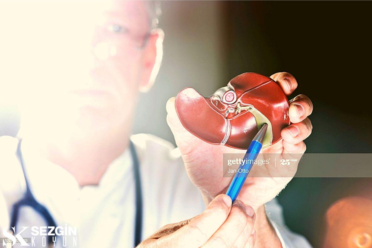 Safra kesesi ve Karaciğer: Sindirimde İşlev ve Rol