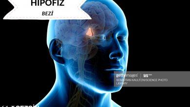 Photo of Hipofiz Bezi Nedir? – Fonksiyonlar ve Hipotalamus