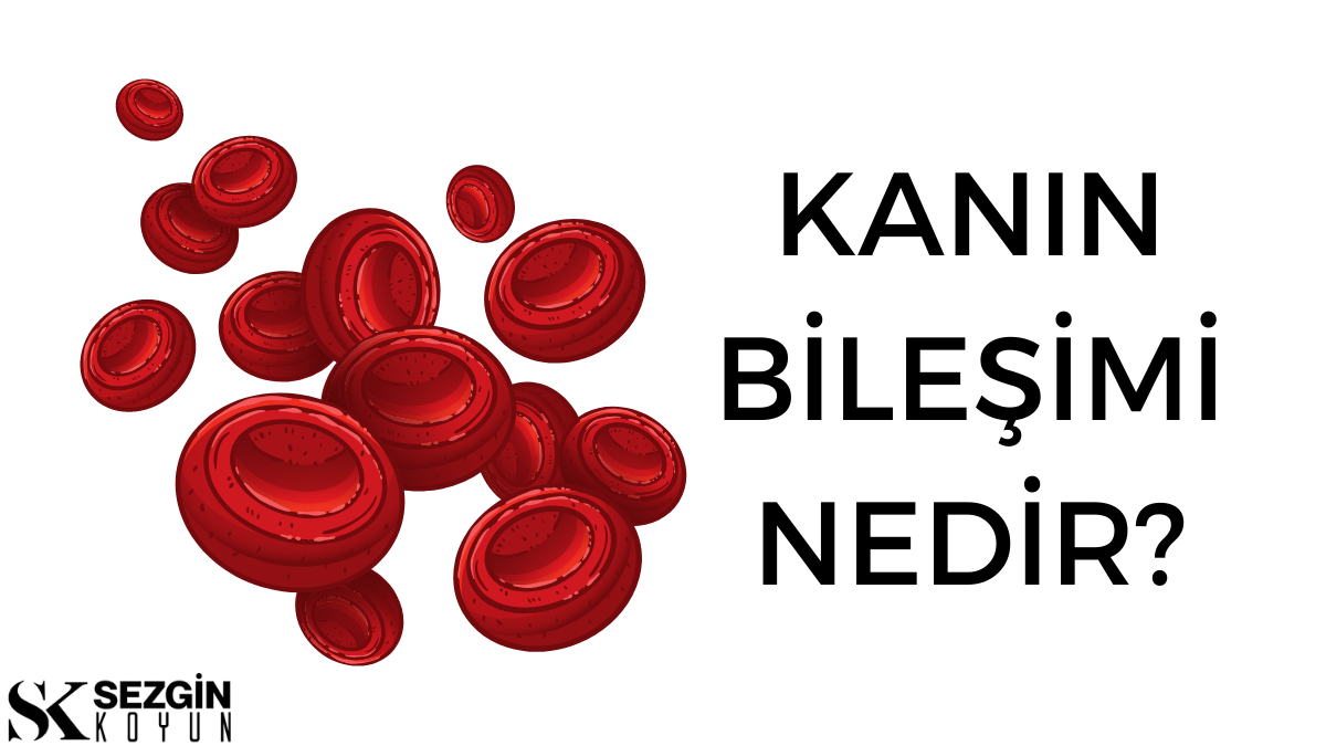 Kanın Bileşimi Nedir? Kan ve Plazma