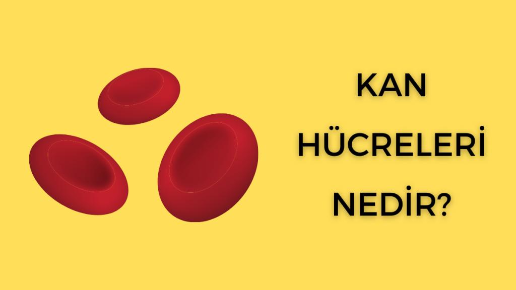 Kan Hücreleri Nedir? - Fonksiyonlar ve Tipler